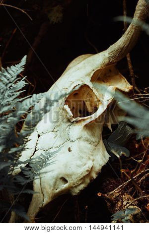 Bull Skull Among Fern Leaves