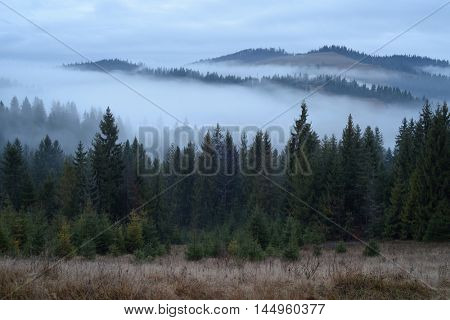 Autumn landscape with fog and spruce forest in the mountains. The evening after sunset. Carpathians, Ukraine, Europe