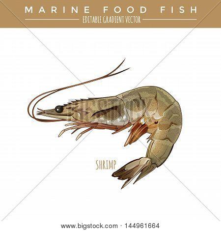 Shrimp illustration. Marine food fish, editable gradient vector