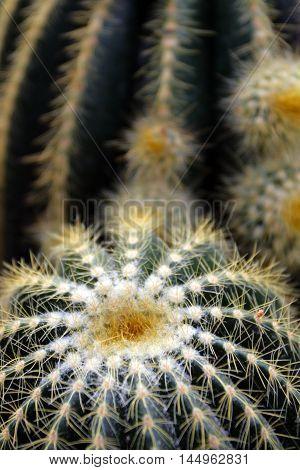 Cactus..