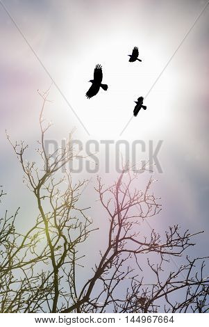 Black Crows over shining sun autumn background