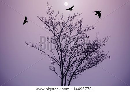 Black dry tree and crows silhouettes on purple sky background