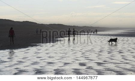 Beach silhouettes of people and dog in silver rain