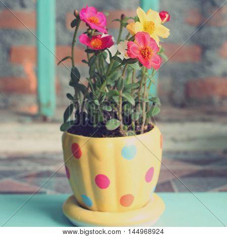 Portulaca Flowers, Retro Tone
