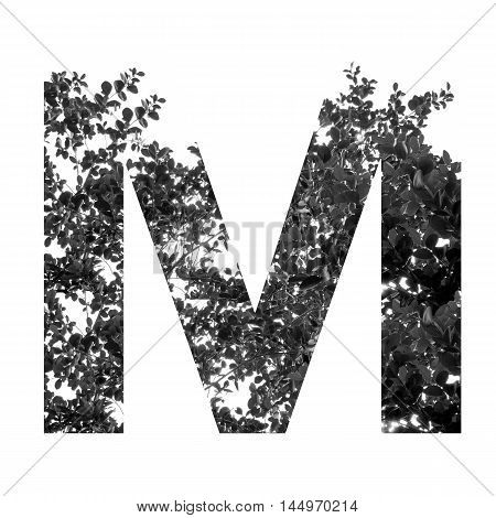 M Letter Double Exposure With Black And White Leaves Isolated On White Background,clipping Path