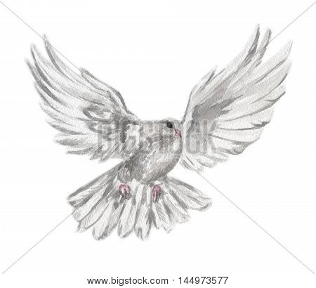 Watercolor dove set. White pigeon symbol of love , piece and freedom. Beautiful creature for lovely art and decoration.
