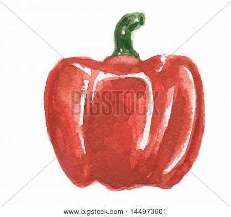Isolated watercolor pepper on white background. Healthy and tasty vegetable with vitamins.