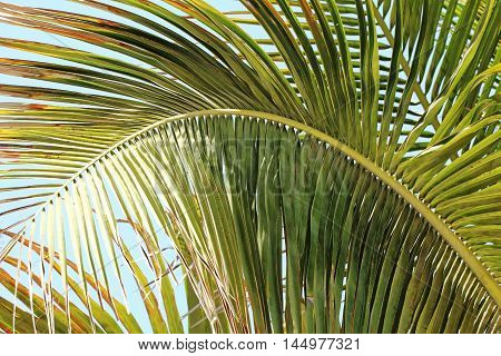Curved palm leaf in the United Arab Emirates