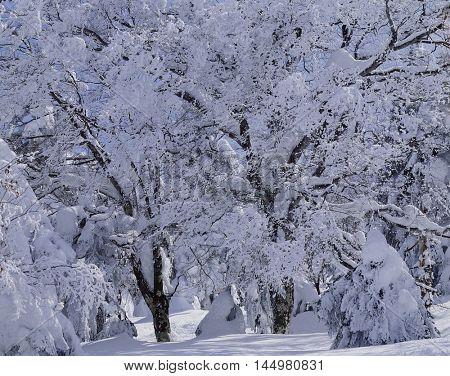 Beautiful snow winter landscape