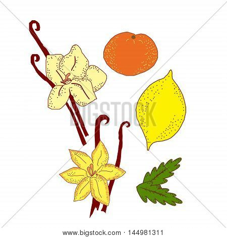 Vector childlike set of most popular odor things isolated on white. Elements for special perfume or aroma sources illustration for products magazines books. Textile. Postcards and covers.