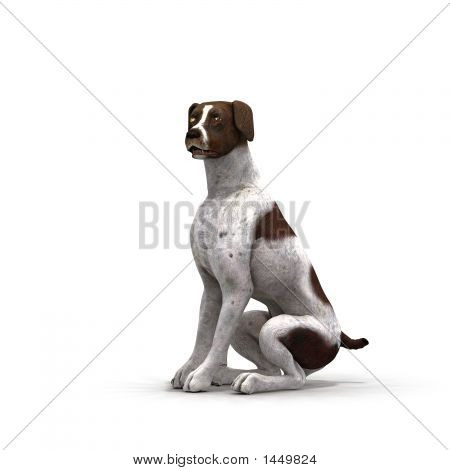 German Shorthair - 02