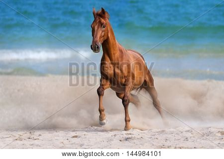 Horse run gallop on seashore at summer day