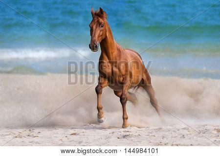Horse run gallop on seashore at summer day