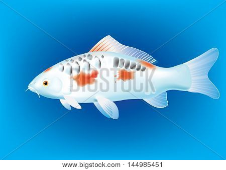 Vector illustration of koi carp breed Mirror