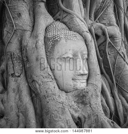 Head of Buddha statue in the tree roots at Wat Mahathat temple Ayutthaya Thailand.