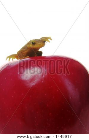 a newt slapping an apple of course