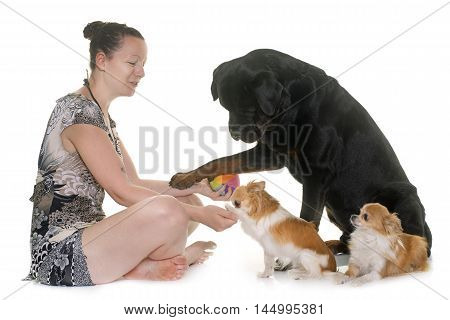 purebred chihuahua, rottweiler and woman in front of white background