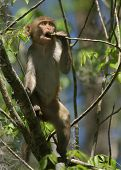 foto of tarzan  - (Wild Florida Monkey) Thank you very much for looking Silver River Florida
