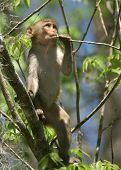 picture of tarzan  - (Wild Florida Monkey) Thank you very much for looking Silver River Florida - JPG