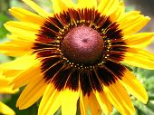 Cropped Macro Of Sunflower poster