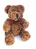 picture of stuffed animals  - brown curly haired teddy bear against a white background - JPG