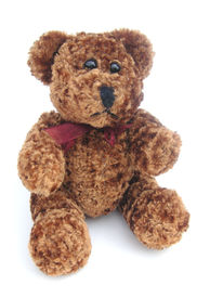 foto of stuffed animals  - brown curly haired teddy bear against a white background - JPG
