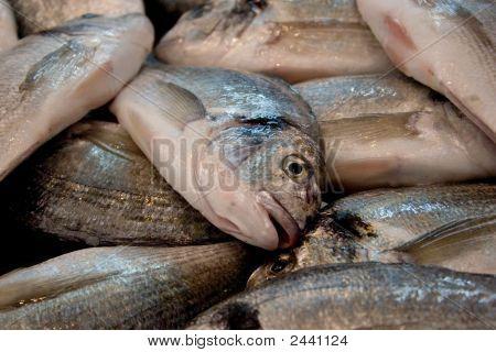 Market Fish Close-Up