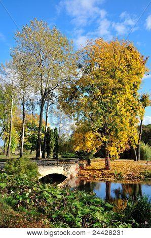 Maple, aspen and arched bridge. Dendropark