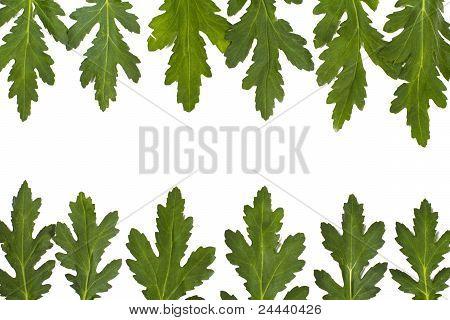 Green Leaf Border Over White