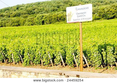 grand cru vineyards Chambertin, Burgundy, France