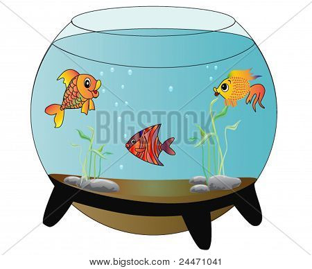 Aquarium With Merry Fish Is Insulated