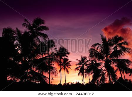 Pink And Red Sunset Over Sea Beach With Palms