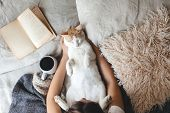 Cute ginger cat is sleeping in the bed on warm blanket. Cold autumn or winter weekend while reading  poster