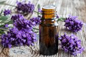A Bottle Of Essential Oil With Fresh Blooming Lavender poster