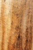 picture of tlingit  - Detail of cedar plank that has been adzed by traditional Alaska Tlingit method - JPG