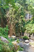 pic of gunung  - Park nearby Temple - JPG