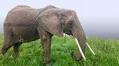 Asian Elephants Are The Largest Living Land Animals In Asia.asian Elephants Are Highly Intelligent A poster