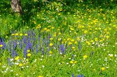 Beautiful Spring Bows With Blooming Blooms. Meadow Flower poster