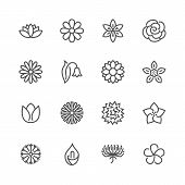 Flowers Flat Line Icons. Beautiful Garden Plants - Chamomile, Sunflower, Rose Flower, Lotus, Carnati poster