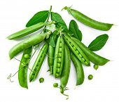 Green pea in pod with leaves still life with fresh vegetable healthy food, isolated on white backgro poster