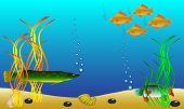 Постер, плакат: Подводный ландшафт рыб и морских водорослей