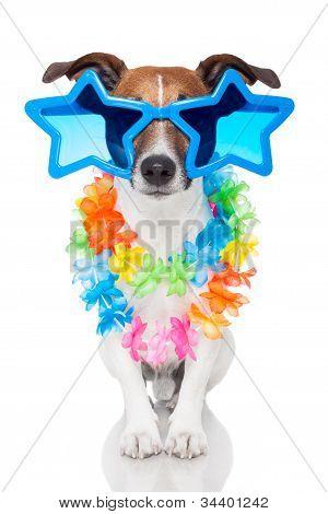 Gay Dog