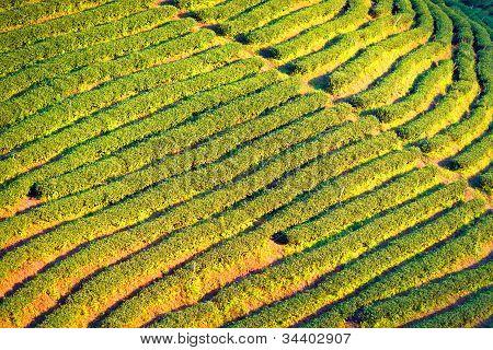 Tee-Terrasse