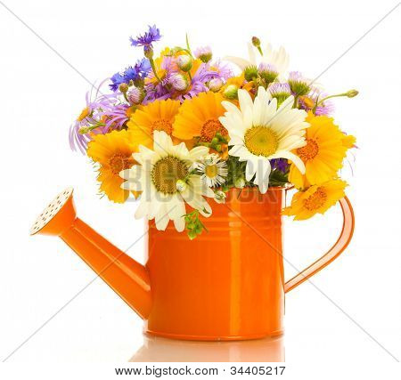beautiful bouquet of bright  wildflowers in watering can, isolated on white
