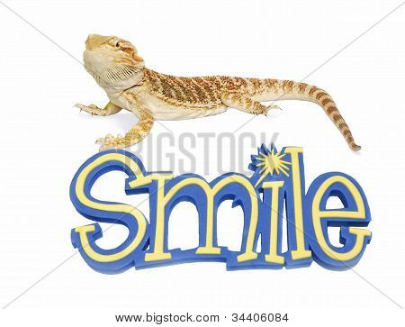 Bearded Dragon Can Smile