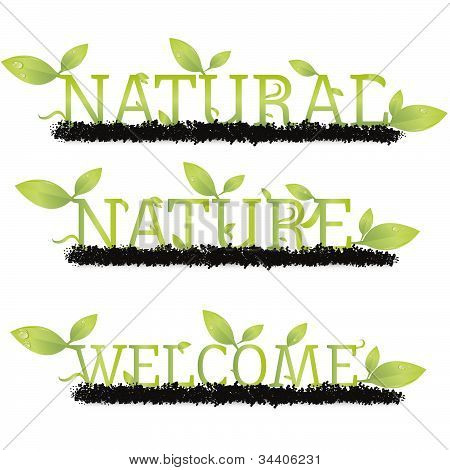 Natural lettering Vector Image