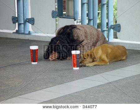 Begging Dog