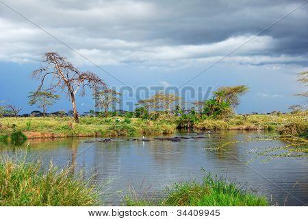 African Landscape, Serengeti, Tanzania