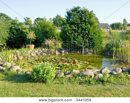 Beautiful Garden Fish Pond With Water Lilies