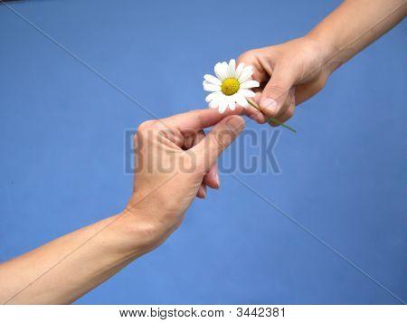 Gives A Daisy Away